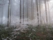 Frost in the forest of the Swiss Alps Stock Images