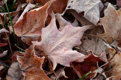 Frost formed ice crystals on veins of fallen leaf royalty free stock photography