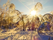 Frost after freezing rain.  Royalty Free Stock Photo