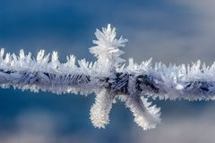 Frost, Freezing, Winter, Sky royalty free stock image