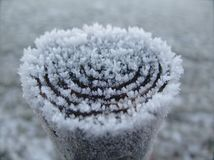 Frost, Freezing, Winter, Snow Stock Images