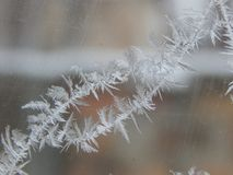 Frost Royalty Free Stock Photography