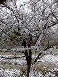 Frost. Frozen plum tree on street Stock Photo