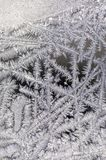 Frost on glass of window Stock Images