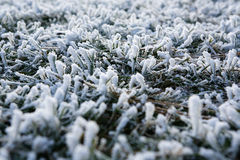 Frost on grass. Detail of frost and snow on grass Royalty Free Stock Images