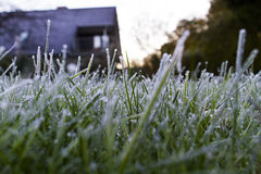 Frost on grass. In garden Stock Photography