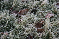 Frost on grass. Image of morning frost with leaves on grass Stock Photography