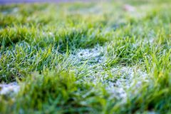 Frost on grass Stock Images
