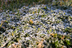 Frost on Grass at Dawn Royalty Free Stock Images