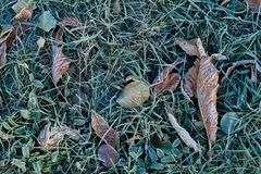 Frost on grass and dry leaves royalty free stock photography