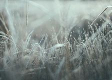 Frost. On the grass y morning Royalty Free Stock Photos