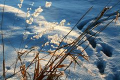 Frost on grass, late afternoon. Frost on grass in late afternoon sun.  Animal tracks approach but turn away Royalty Free Stock Photos