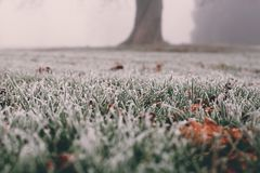frost on grass and leaves on a cold foggy winter morning in London, UK. stock image