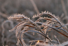 Frost on the grass Stock Photography