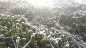 Frost on the grass. Frost  grass morning fog Royalty Free Stock Photo