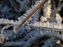 The frost on the grass in November. Morning ice royalty free stock photo