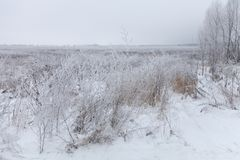 Frost on a grass. Russian provincial natural landscape in gloomy weather.  royalty free stock photo