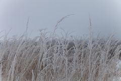 Frost on a grass. Russian provincial natural landscape in gloomy weather.  stock photos