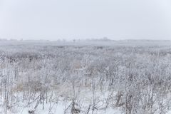 Frost on a grass. Russian provincial natural landscape in gloomy weather.  royalty free stock photography