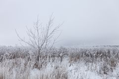 Frost on a grass. Russian provincial natural landscape in gloomy weather.  royalty free stock image