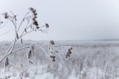 Frost on a grass. Russian provincial natural landscape in gloomy weather. Selective focus. Shallow depth of field.  royalty free stock image