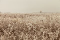 Frost on a grass. Russian provincial natural landscape in gloomy weather. Toned.  stock photography