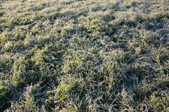 Frost on the grass. Sunny morning Stock Images