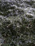 Frost grass texture stock photography