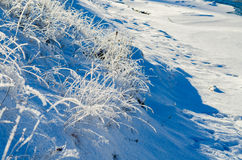 Frost on the grass Royalty Free Stock Photography
