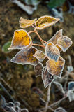 Frost on the grass and yellow leaves. On a frosty morning, Oct stock image