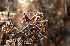 Frost on the grass and yellow leaves. On a frosty morning, Oct stock photography