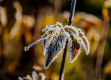 Frost on the grass and yellow leaves. On a frosty morning, Oct stock photo
