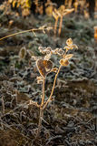 Frost on the grass and yellow leaves. On a frosty morning, Oct royalty free stock photo