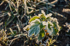 Frost on the grass and yellow leaves Stock Image
