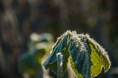 Frost on the grass and yellow leaves Royalty Free Stock Photo