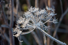 Frost on the grass and yellow leaves. On a frosty morning, Oct stock photos