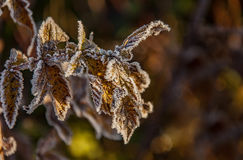 Frost on the grass and yellow leaves. On a frosty morning, Oct royalty free stock photography