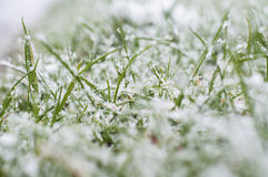 Frost on the grass Stock Image