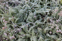 Frost on the green grass Royalty Free Stock Photography