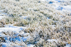 Frost on the ground. A cold winter morning with a coating of frost on the grass Stock Photos