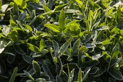 May frosts. Frost on the ground in a country Park early one morning in may Stock Image