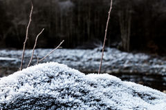 Frost on growning on rocks Stock Photos