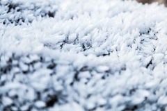 Frost on growning on rocks Stock Photography