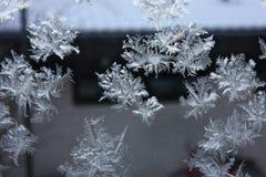 Frost i fönster arkivfoto