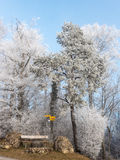 Frost i skogen av de schweiziska fjällängarna arkivbilder
