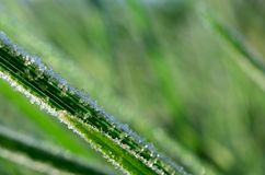 Frost and ice on autumn grass in early morning Royalty Free Stock Images