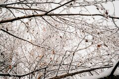 Frost and ice on branches Royalty Free Stock Images