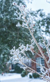 Frost and ice on branches. Royalty Free Stock Photos