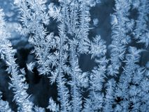 Frost icy flowers on a glass Royalty Free Stock Image