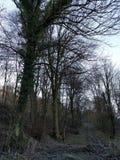 Frost im Wald Stockfotos